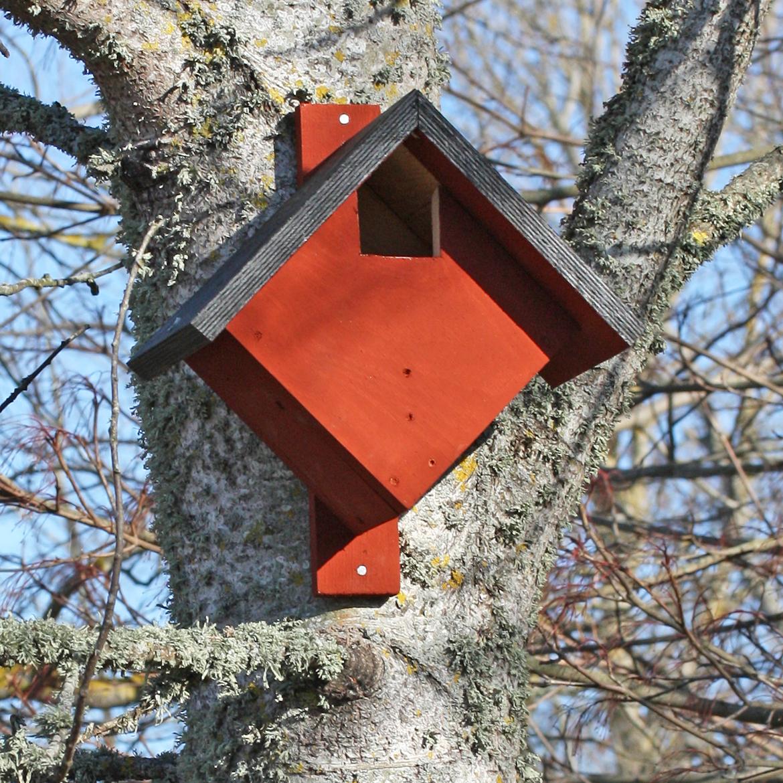 Fågelholk till rödhake