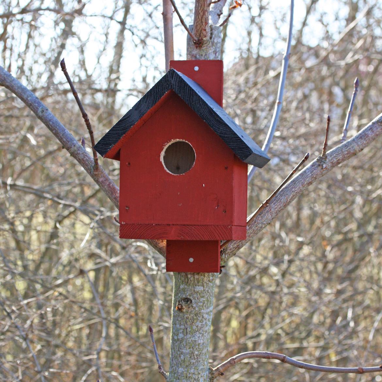 Fågelholk rödstjärt