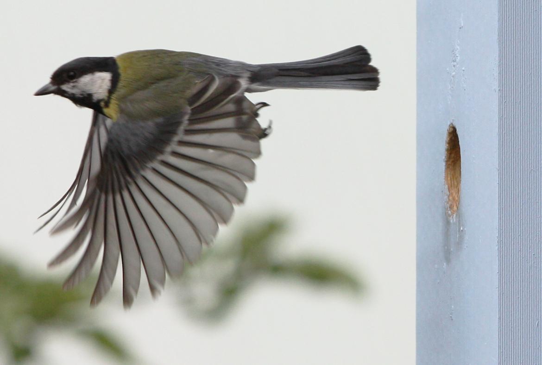 Rapport från fågelholkslivet